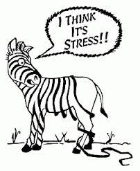 Mindfulness zebra stress